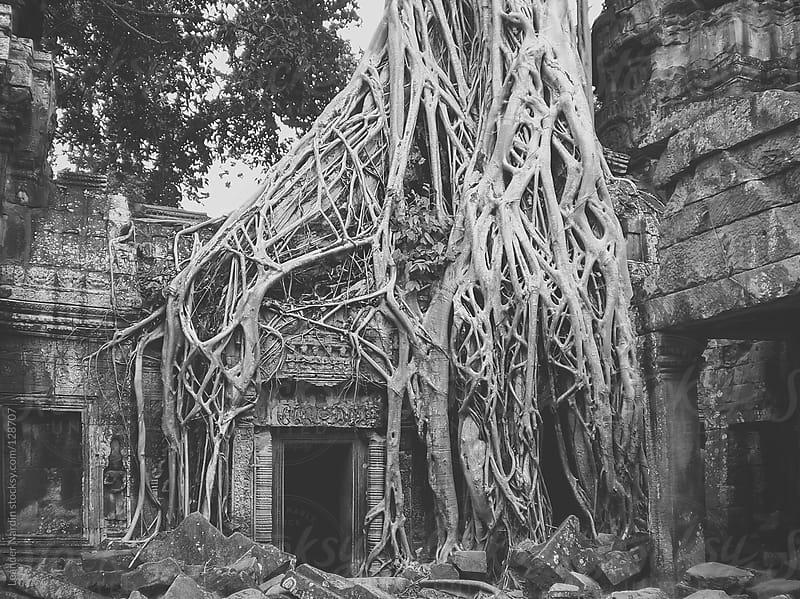 Tree in Ta Phrom. Angkor Wat, Cambodia by Leander Nardin for Stocksy United