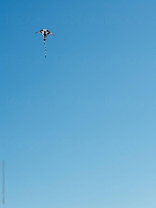 Kite in the skye by Milena Milani for Stocksy United