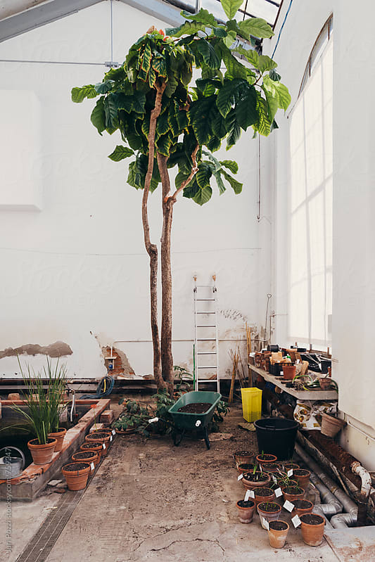 old greenhouse by Juri Pozzi for Stocksy United