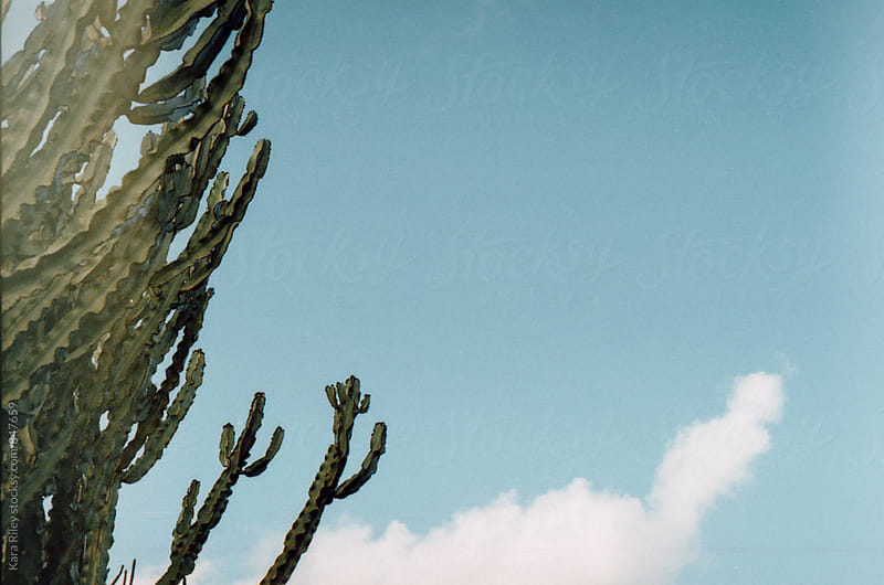 Cacti in the clouds by Kara Riley for Stocksy United