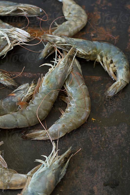 Raw prawns by Noemi Hauser for Stocksy United