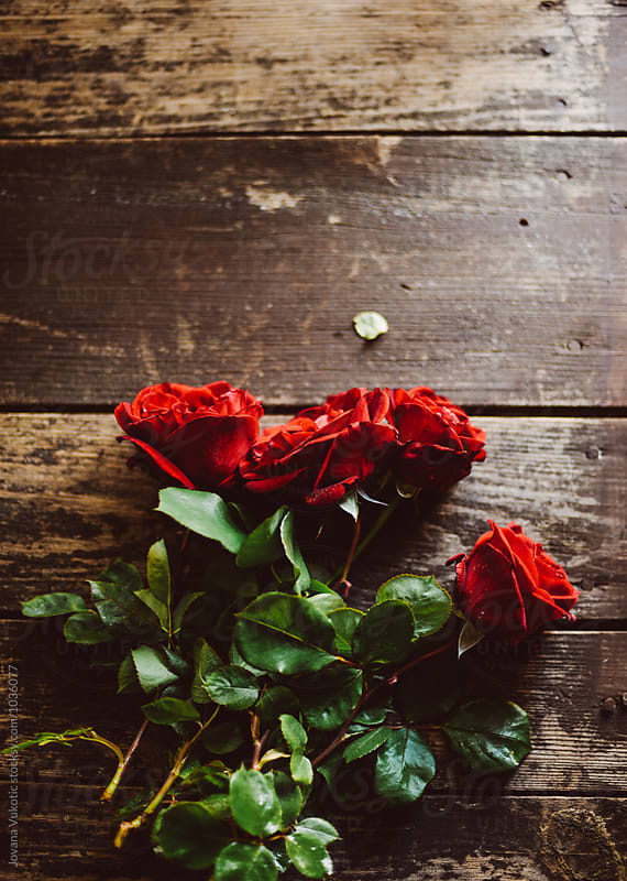 Red roses by Jovana Vukotic for Stocksy United