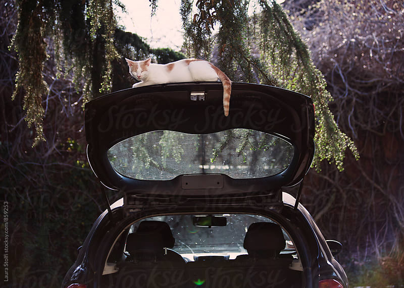 Cat blinks while laying on opened top of car's boot  by Laura Stolfi for Stocksy United