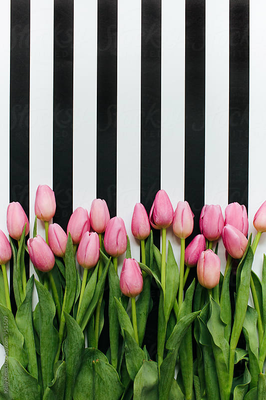 bunch of pink tulips on a striped background by Kelly Knox for Stocksy United
