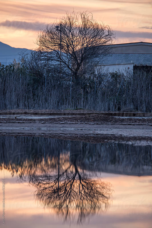 Tree Standing Alone with Reflection in Water by Luca Pierro for Stocksy United