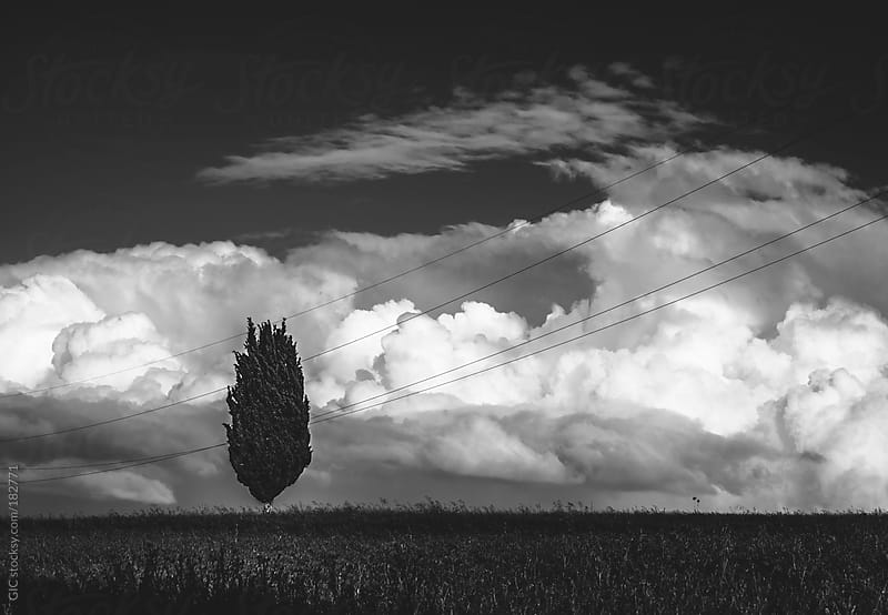 Cypress and storm in Tuscany by GIC for Stocksy United