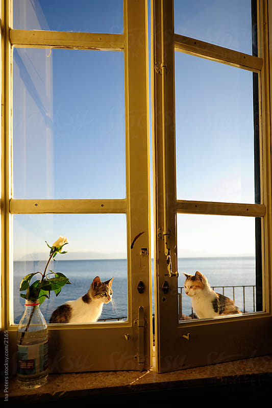 Two cats sitting outside the window by Ina Peters for Stocksy United
