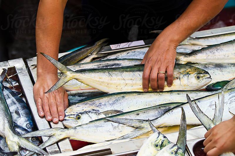 Fish market in Catania, Sicily by Török-Bognár Renáta for Stocksy United