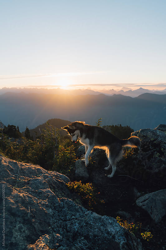 Dog at Sunrise by Michael Overbeck for Stocksy United