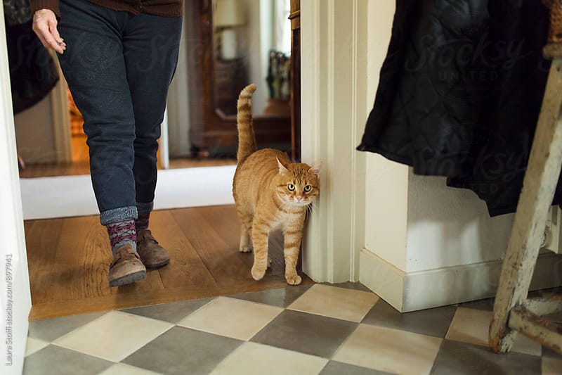 Red cat and owner walking side by side at home by Laura Stolfi for Stocksy United