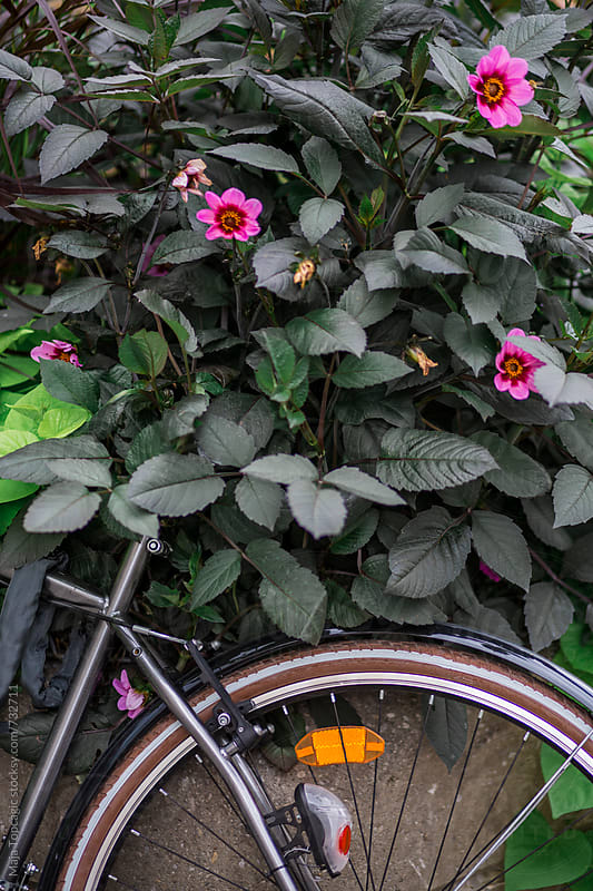 Vintage bike parked in flowers on the street by Maja Topcagic for Stocksy United