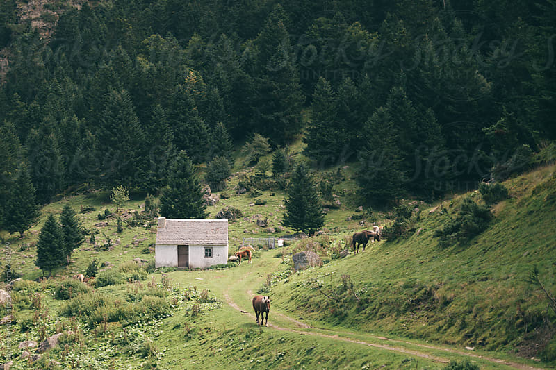 rural road in the mountains by Javier Pardina for Stocksy United
