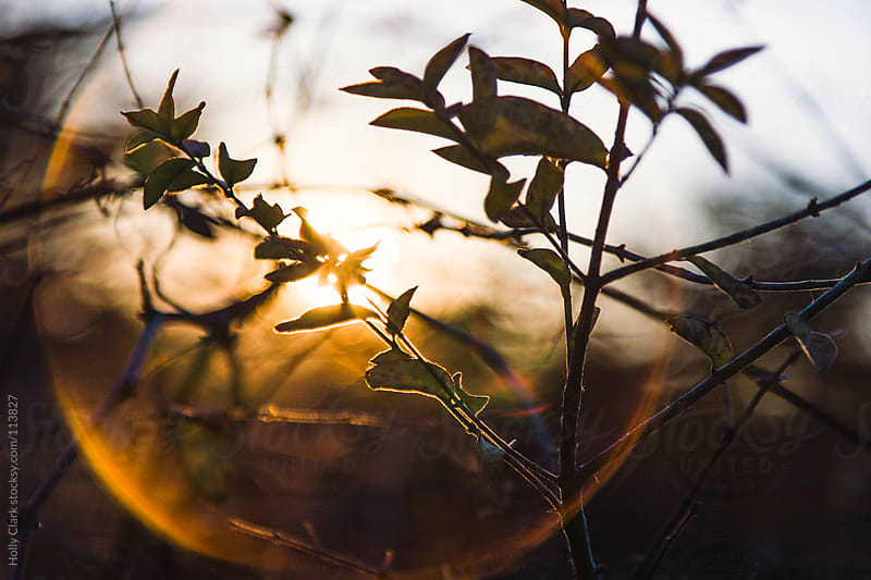 A sunset silhouettes a tree branch in a circle of light by Holly Clark for Stocksy United