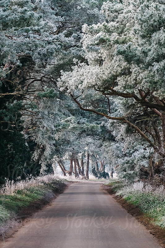 Hoar frost covered trees lining a rural road. Norfolk, UK. by Liam Grant for Stocksy United