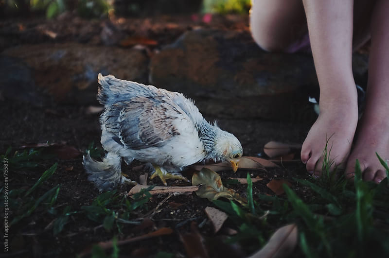girl with chickens by Lydia Trappenberg for Stocksy United