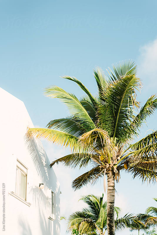 Palm Tree shadow on the house by Lina Kiznyte for Stocksy United