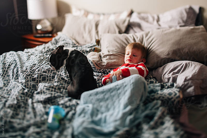 sick day: a little boy laying on his mom's bed with his dog by Sarah Lalone for Stocksy United