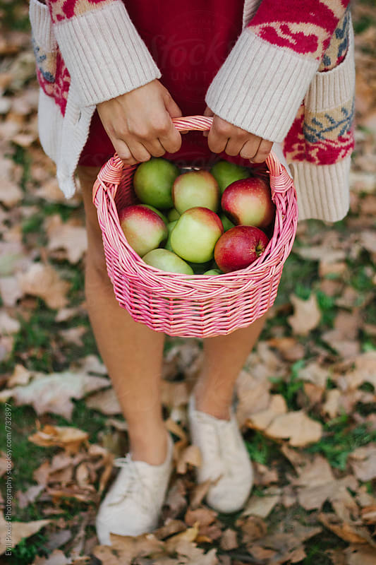 Autumn details - faceless female model hold basket with apples by Branislava Živić for Stocksy United