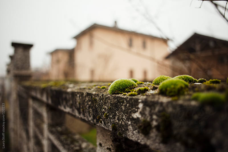 Covered in moss ancient concrete wall in italian village by Laura Stolfi for Stocksy United