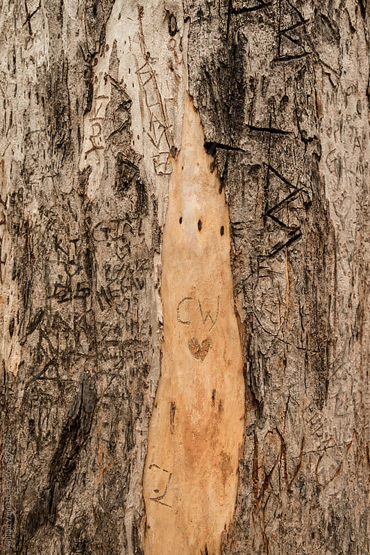 tree trunk with graffiti by Gillian Vann for Stocksy United