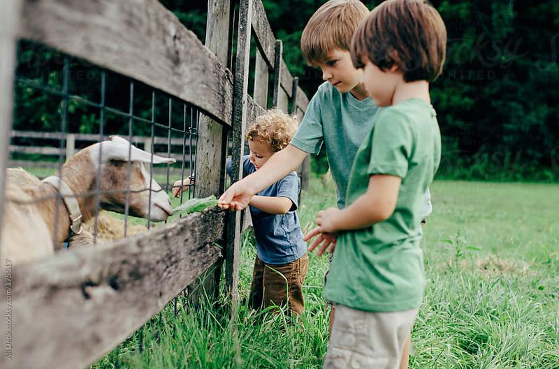 Three Boys Feed a Goat by Ali Deck for Stocksy United