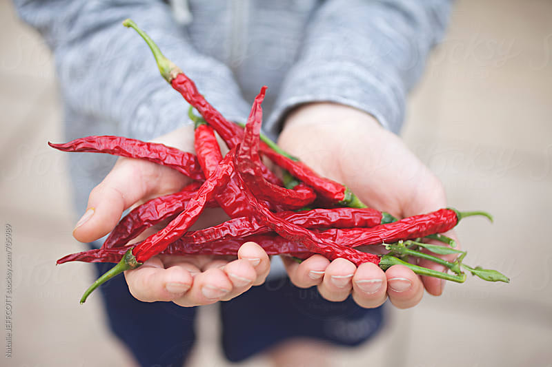 young boy holds his home grown, organic red chilli, dried. by Natalie JEFFCOTT for Stocksy United