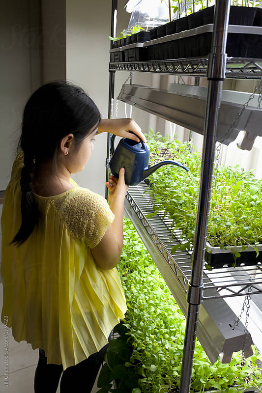 Growing Seedlings and Microgreens by Jill Chen for Stocksy United