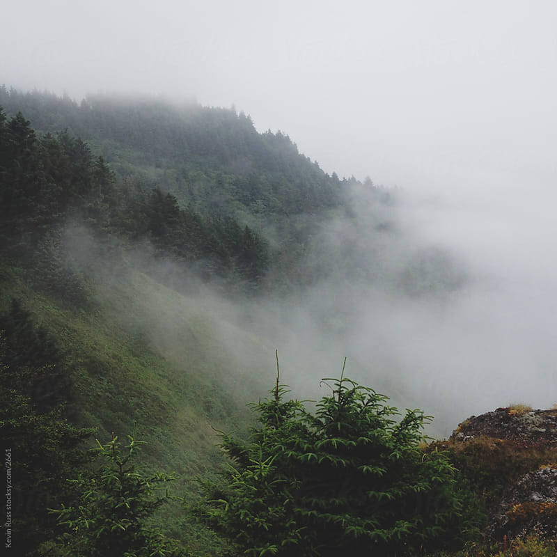 Foggy Oregon Forest Hills by Kevin Russ for Stocksy United