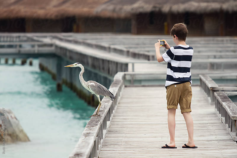 Boy photographing a grey heron by Ruth Black for Stocksy United