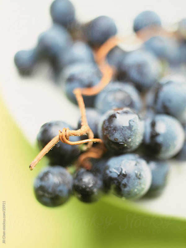 Concord Grapes by Jill Chen for Stocksy United
