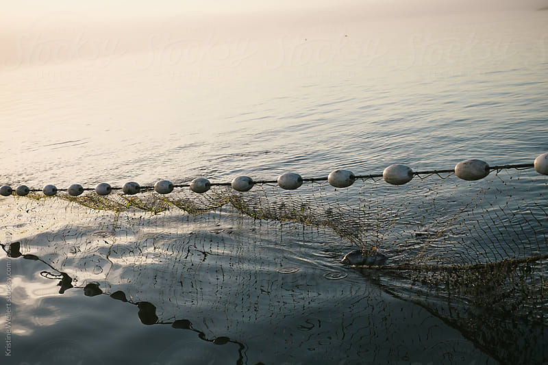 Fishing nets in the water by Kristine Weilert for Stocksy United