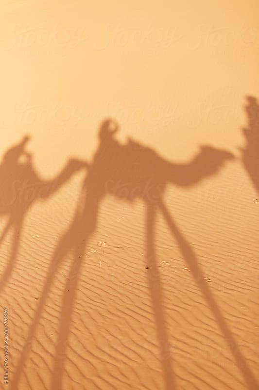 Camel Shadow by Hillary Fox for Stocksy United