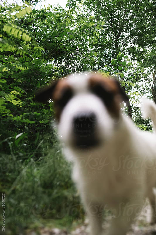 Dog looking into camera by GIC for Stocksy United