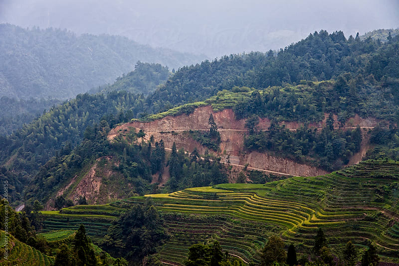 Mountains covered with forest and rice terraces by Alice Nerr for Stocksy United