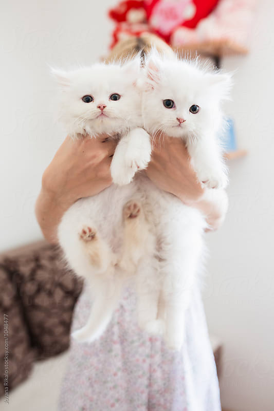 Young woman holding two persian kittens by Jovana Rikalo for Stocksy United