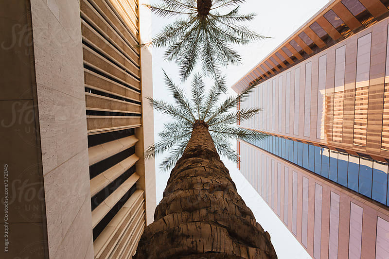palm trees and buildings from below by Image Supply Co for Stocksy United