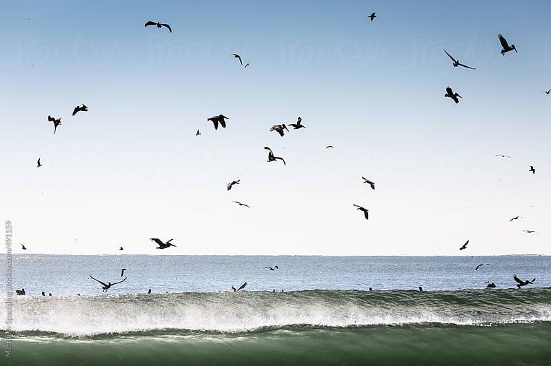 Flock of pelican birds diving in ocean surf catching fish by Matthew Spaulding for Stocksy United