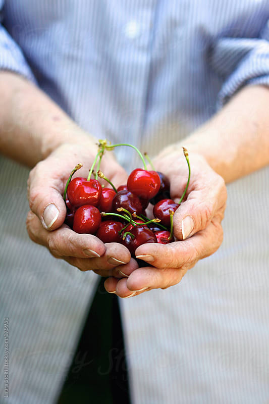 Summer is an handful of organic cherries by Laura Stolfi for Stocksy United