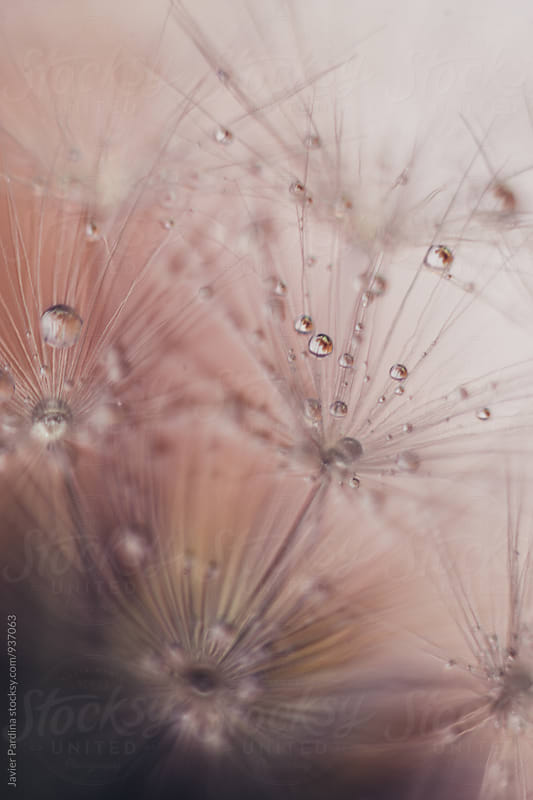 Detail of flowers and plants with waterdrops by Javier Pardina for Stocksy United