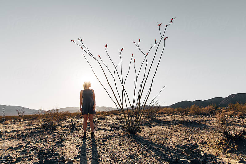 Pregnant Blonde Woman Standing Next To Desert Ocotillo Plant In Joshua Tree National Park by Luke Mattson for Stocksy United