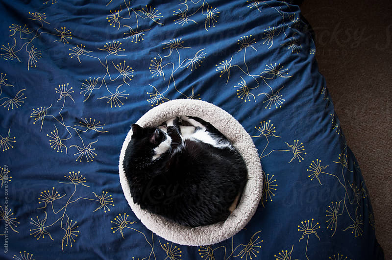 Cat sleeps curled up into her donut pillow on her owner's bed by Kathryn Swayze for Stocksy United