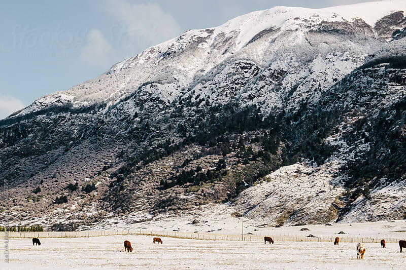 Cows grazing in the distance under a steep mountain in the background by Justin Mullet for Stocksy United