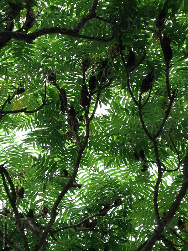 Green treetop during the summer time  by VeaVea for Stocksy United