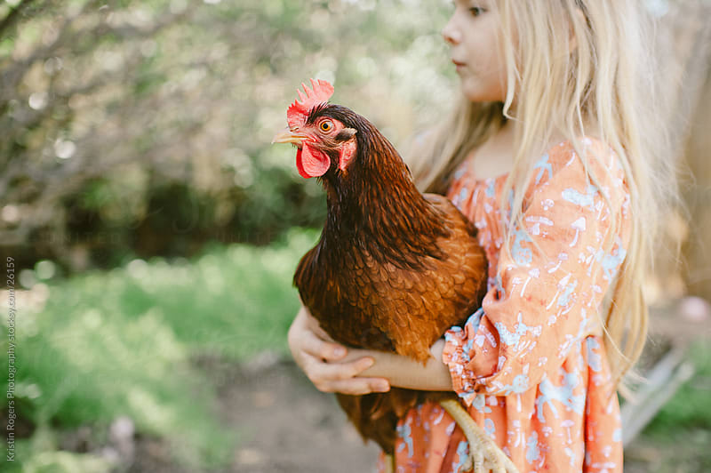 Little girl holding a Rhode Island Red Hen by Kristin Rogers Photography for Stocksy United