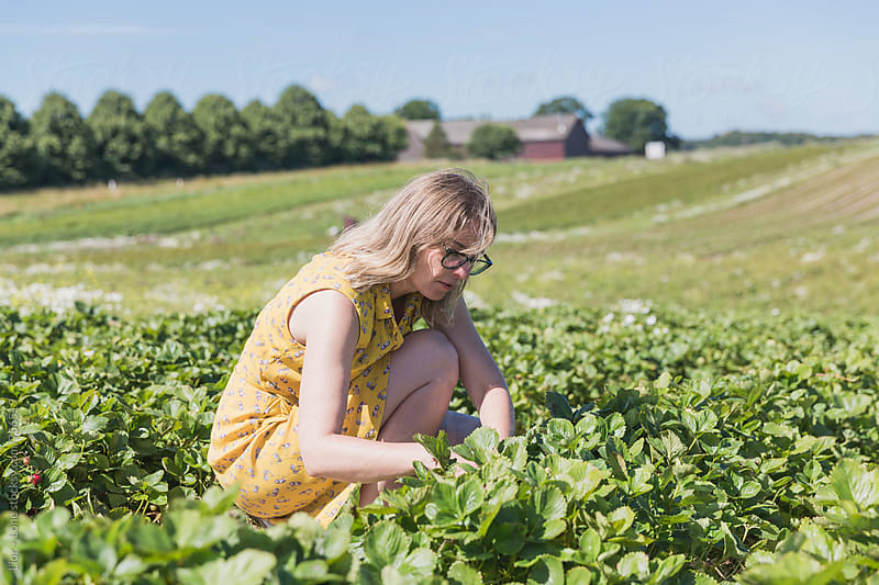 Woman in yellow dress picking strawberries by Lior + Lone for Stocksy United