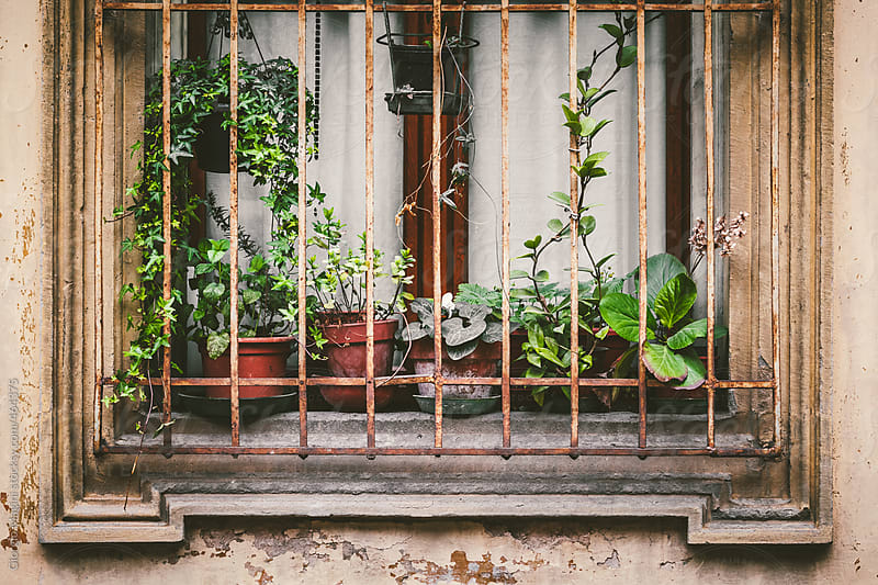 Potted Plants Caged in an Old Italian Window by Giorgio Magini for Stocksy United