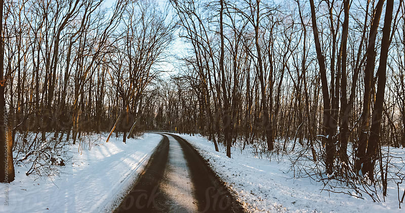 Road through the forest covered with snow by Brkati Krokodil for Stocksy United