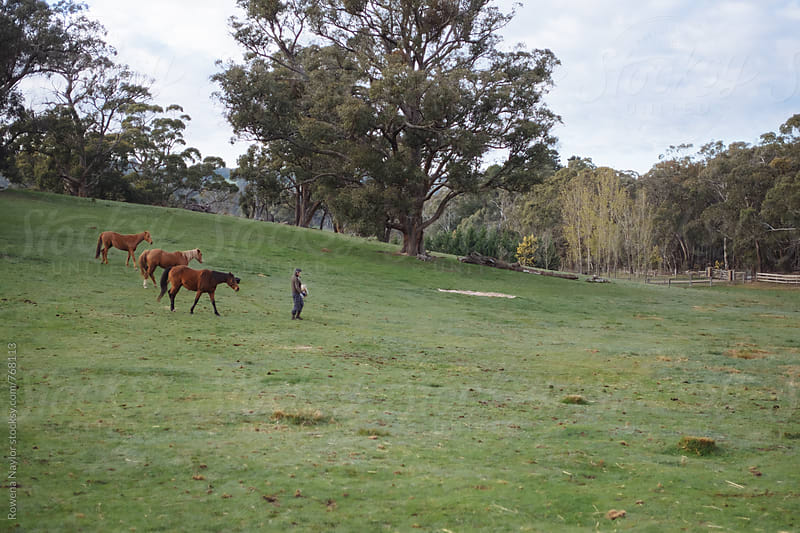 Owner walking with her three horses by Rowena Naylor for Stocksy United