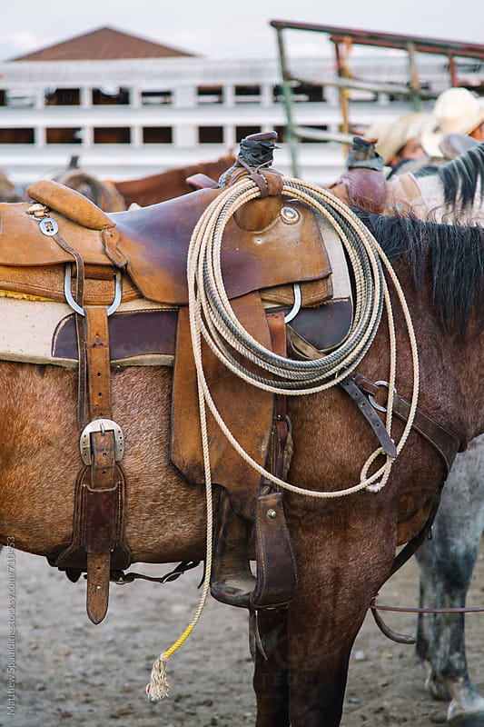 Lasso and saddle on horse ready for rodeo by Matthew Spaulding for Stocksy United