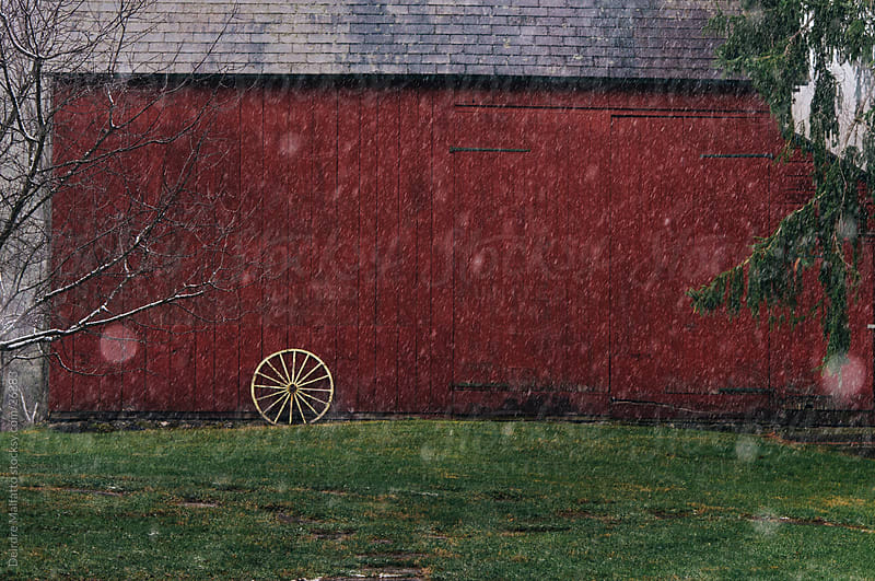 Snow Flakes Falling on a Red Barn by Deirdre Malfatto for Stocksy United